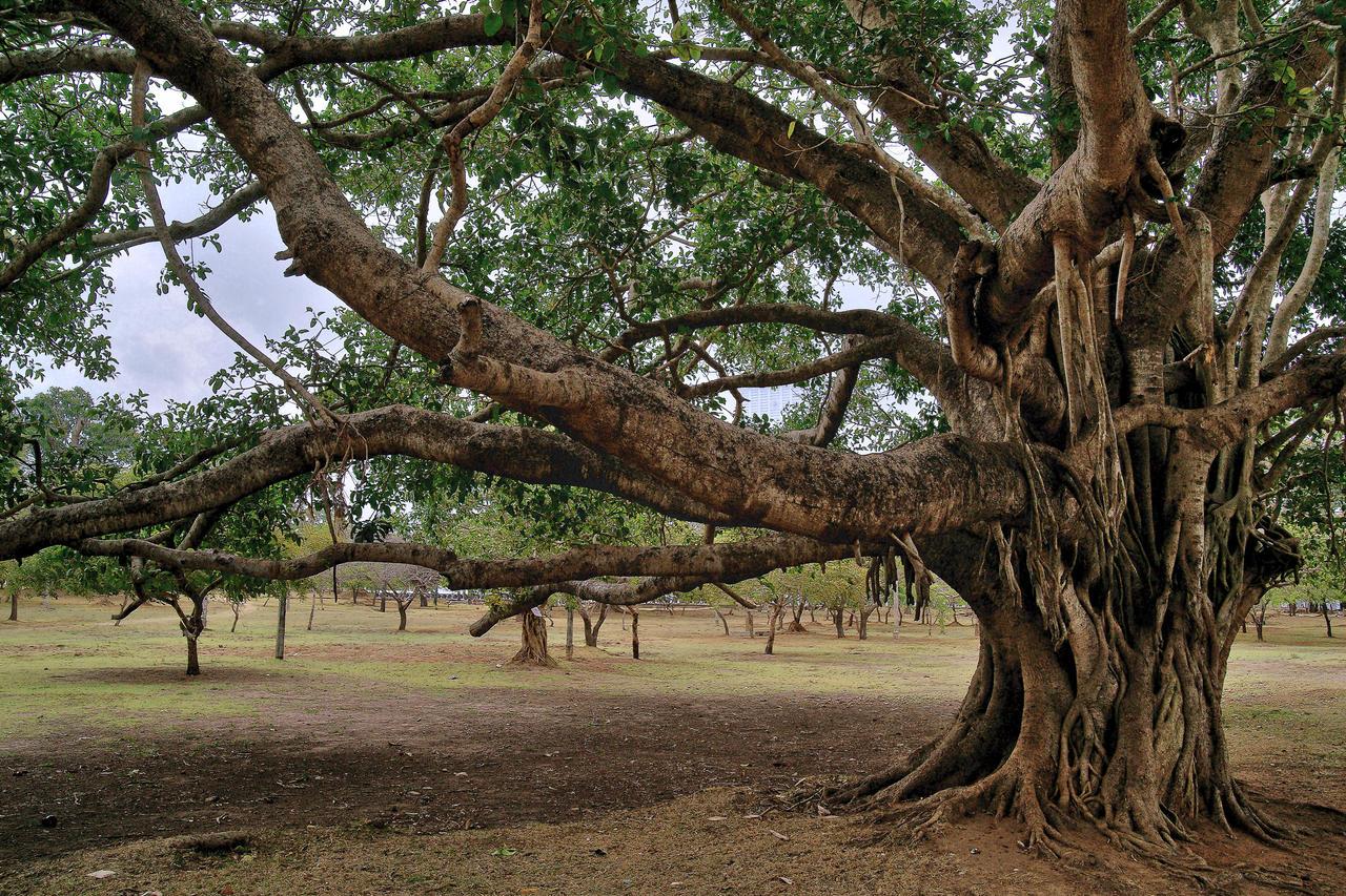 trees wallpaper next