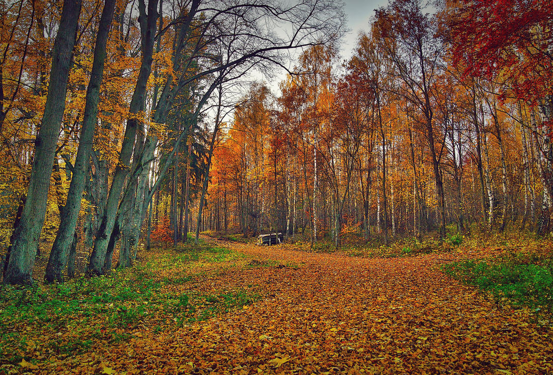 Colorful Forest By Citizenfresh On Deviantart