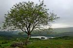 Lonely  Tree 4