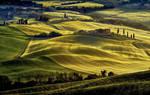 Tuscan  Carpet by CitizenFresh