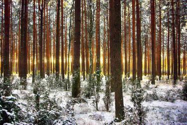 Burning  Forest 4