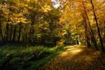 Autumn light and shadows 4