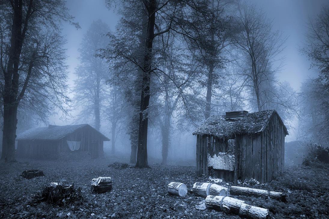 Frosty and misty day 6 by CitizenFresh