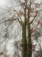 In the fog by CitizenFresh