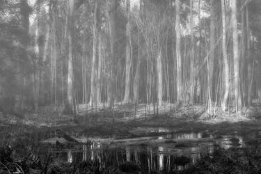 Misty forest by CitizenFresh