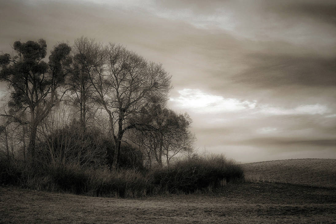 Nature in black and white by CitizenFresh
