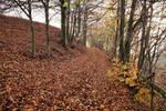 Autumn carpet 2