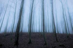 Autumn artistry in mist