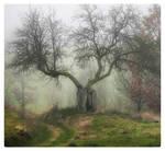 Magic tree in fog