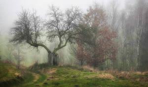 Magic tree in fog 2