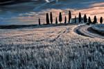 Beautiful Tuscany 66