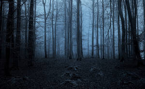 Twilight in the forest