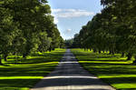 Road to the Glamis Castle-Scotland