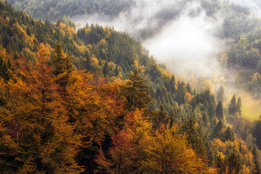 Slovenian autumn 2