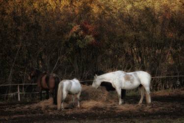 In the autumn entourage
