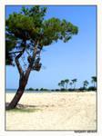 mediteran beach