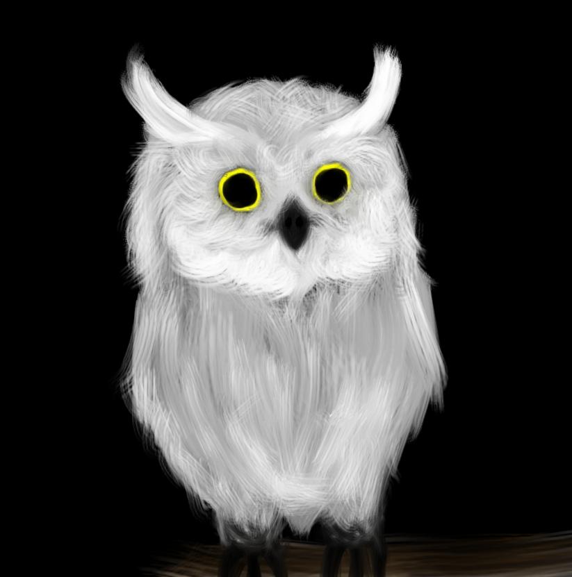 baby white owls