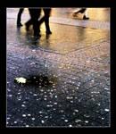 saltsweatsugar on the asphalt