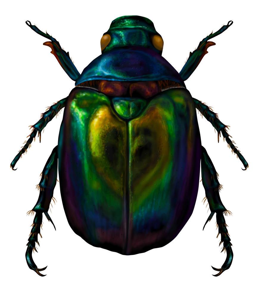 Egyptian Scarab Beetle Drawings - Bing images
