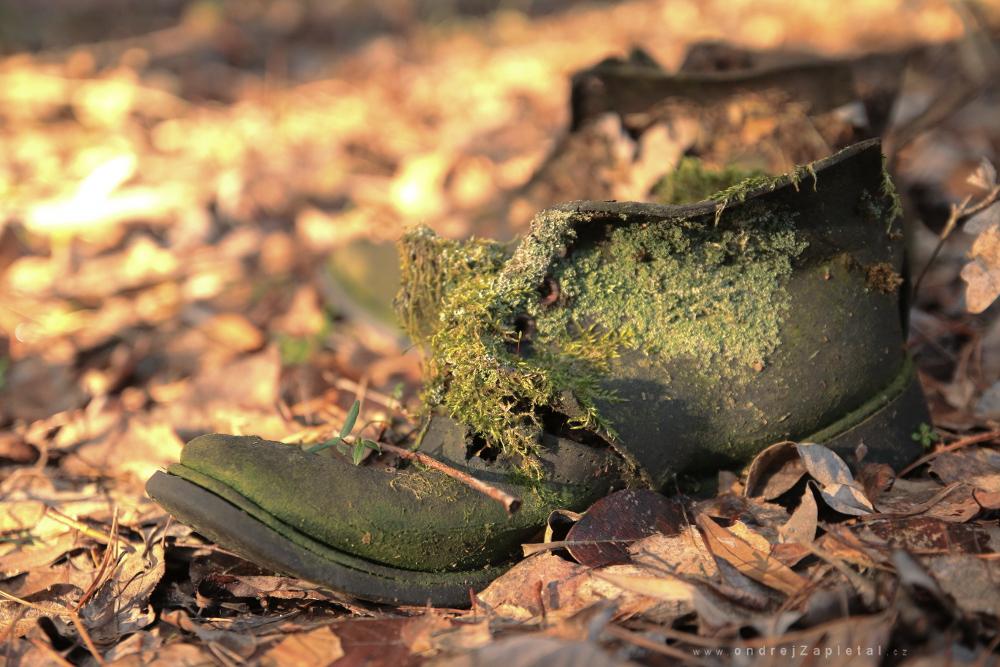 Moss on a Boot by ondrejZapletal