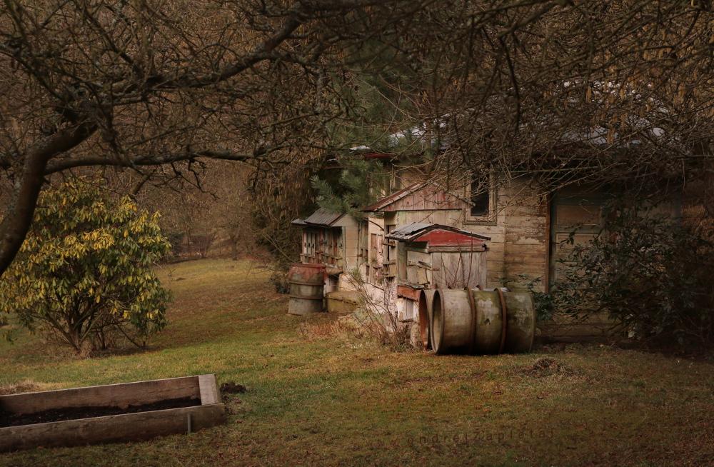 Little Bee Garden by ondrejZapletal