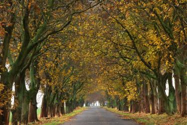 Under Nut Trees by ondrejZapletal