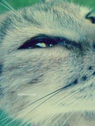 Crystal eyes by SolDurmiente