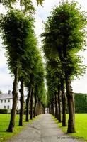 Treelane by joerimages