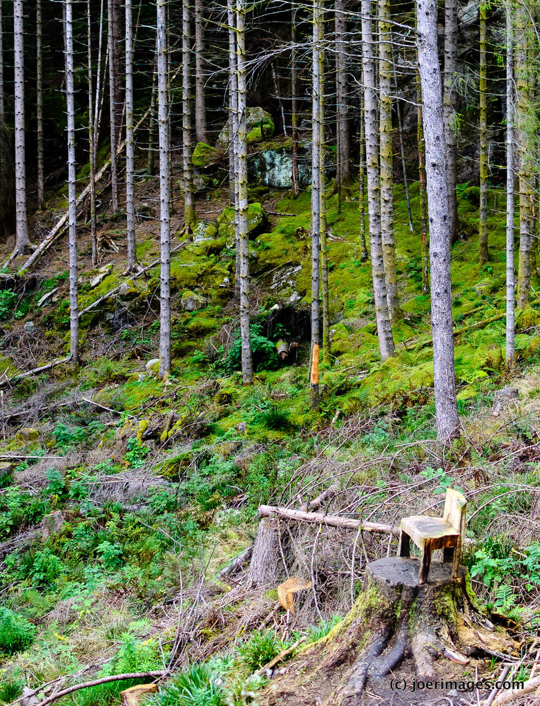 Forest Chair by joerimages
