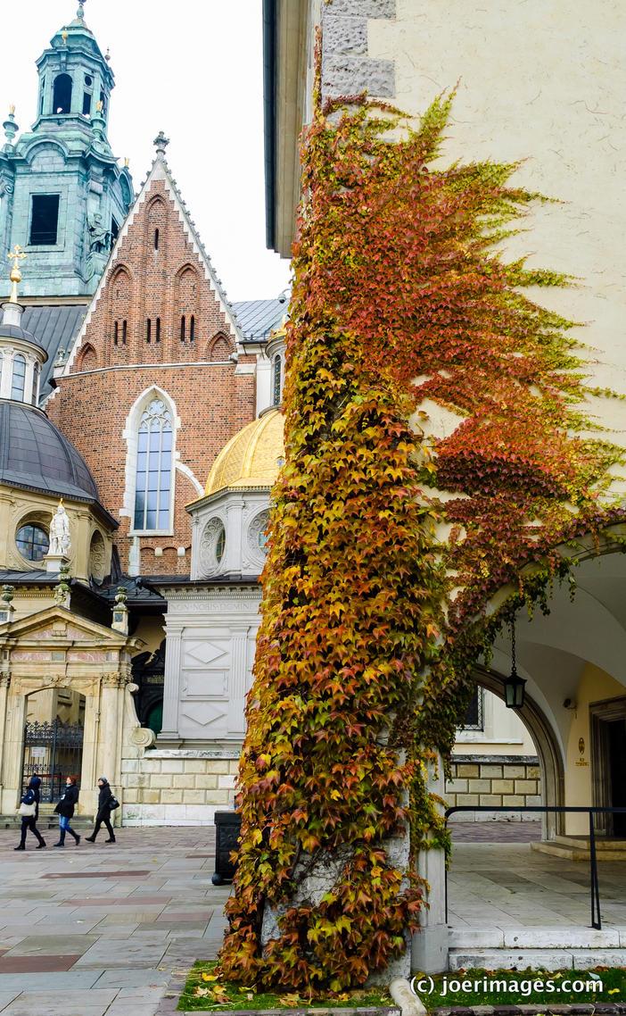 Wawel ivy by joerimages