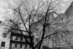 Tree concrete