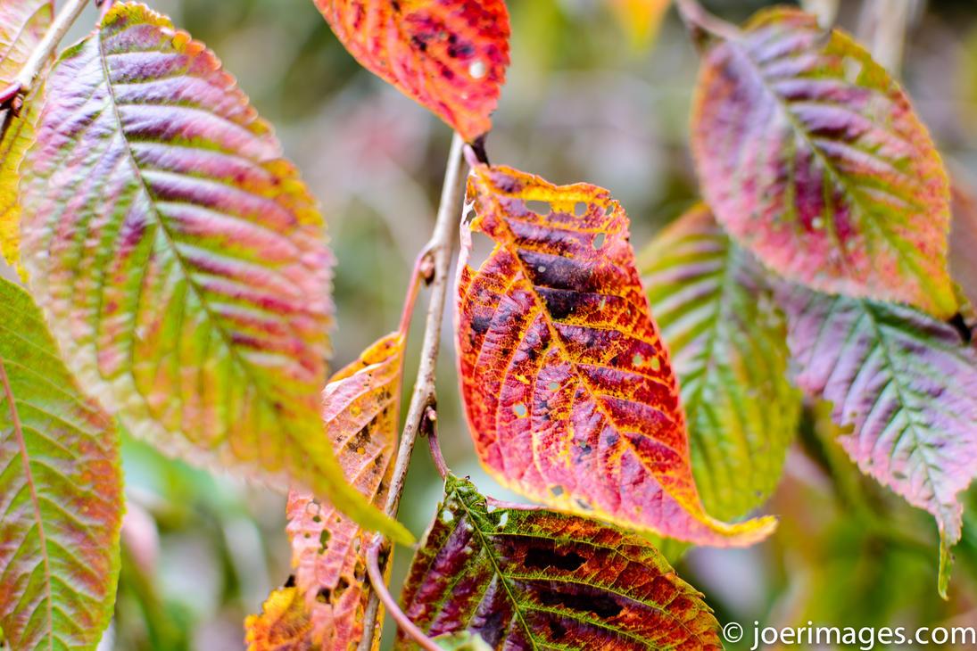 Blood leaves by joerimages