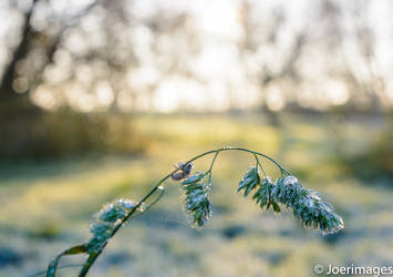 First Frost by joerimages