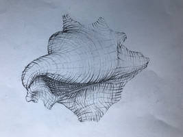 Seashell sketch with contour lines.