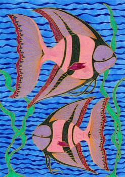 Rosy Angelfish