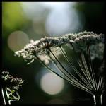 Candelabrum by Caelitha