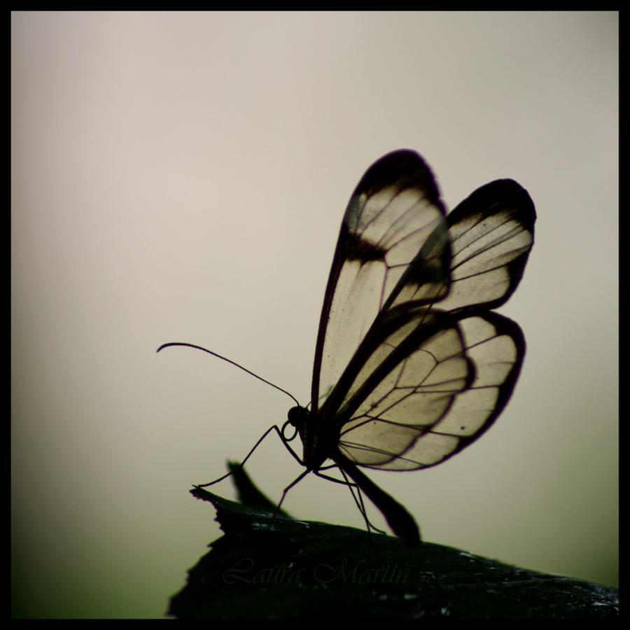 Glass Wings by Caelitha