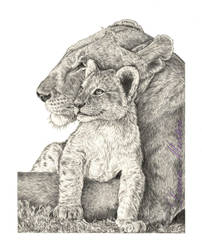 Lions by Caelitha