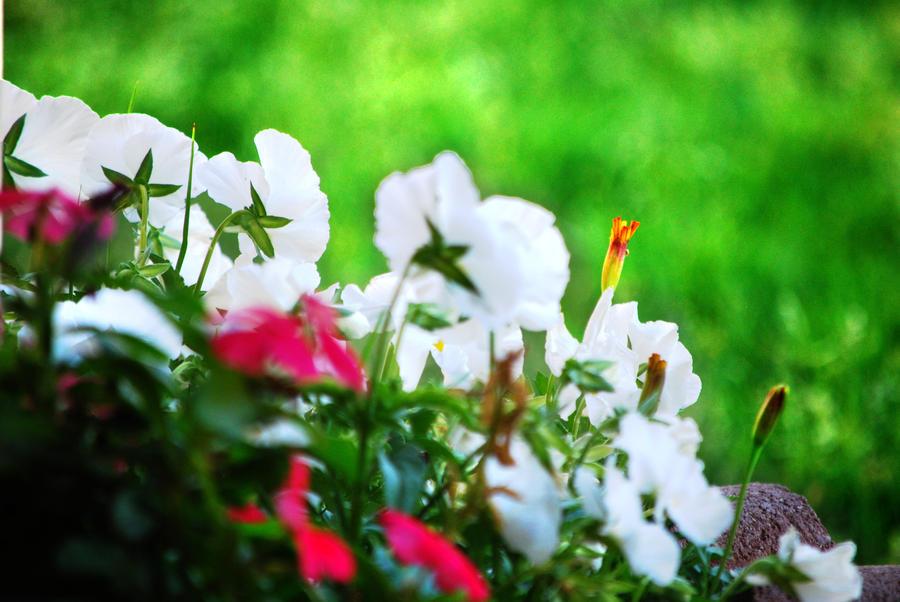Garden by MariZuri