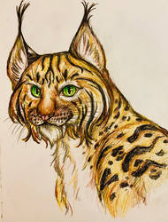Dagger-toothed lynx