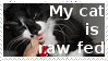 Rawfedcat by Colliequest