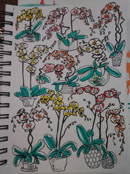 Aug 8 r/sketchdaily 'Orchid'