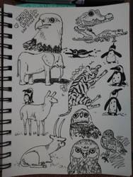 Aug 17 r/sketchdaily Zoo Cam Studies
