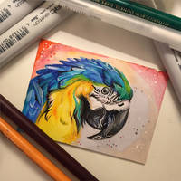 224- Macaw ACEO by Lucky978