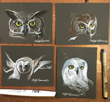 335- 4 Owl Sketches