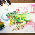 358- Iguana
