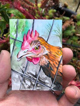 46: Chickens