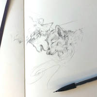 Day 130: Nuzzling Wolves