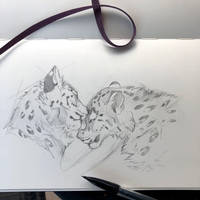 Day 135: Snow Leopard Nuzzles