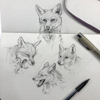 Day 139: Foxy Foxes